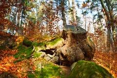 Big stump Royalty Free Stock Image