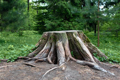 A big stump Stock Images