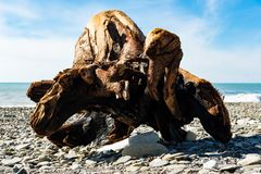A big stump on the shore of the black sea Royalty Free Stock Image