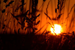 Big sun. Sun down in the fields royalty free stock photography