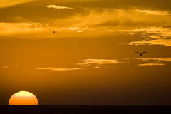 Big sun. Beautiful african sunset at Morocco with a big sun Royalty Free Stock Image