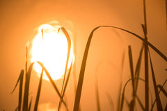 Big sun reflect on water with grass Stock Image
