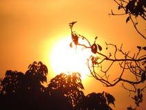 Big sun Thailand stock photography