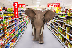 Big supermarket sales elephant Stock Images