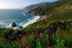 Big Sur. Wildflowers and oceanside Stock Photo