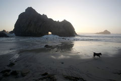 Big Sur Beach Dog Royalty Free Stock Photos