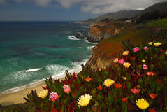 Big Sur California. Along the beautiful shores of Big Sur California in spring bloom Royalty Free Stock Image