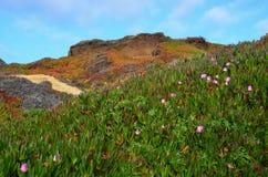 Big Sur, California Foto de archivo libre de regalías