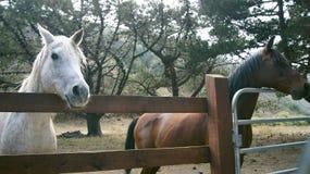 BIG SUR, CALIFORNIA, STATI UNITI - 7 OTTOBRE 2014: Un ranch del cavallo in CA, U.S.A. con i cavalli che stanno lungo il recinto H Fotografia Stock Libera da Diritti