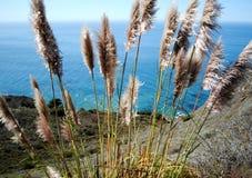 Big Sur coast Royalty Free Stock Photos