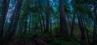 Big Sur Redwood Forest Panorama Stock Photos
