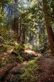 Big Sur Ventana Wilderness Stock Photography