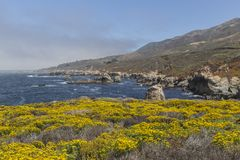 Big Sur Wild Flowers Royalty Free Stock Images