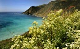 Big Sur y Wildflowers en aturdir la costa de California Imagenes de archivo
