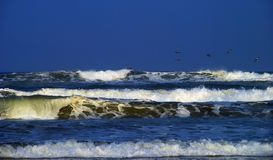Big surf and seagulls. Seagulls flying over big ocean surf due to Hurricane Gustav.  South Padre Island, Texas Stock Photos