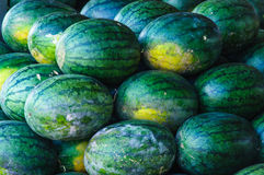 Big sweet green watermelons Stock Images