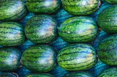 Big sweet green watermelons. In Thailand Royalty Free Stock Photo