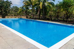 Big swimming pool with palms Royalty Free Stock Image