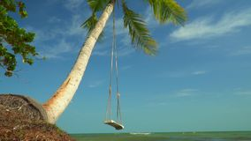 Big swung shake on a palm tree against the background of the blue ocean. Sunny day on the island in Vietnam. A green. On this video you can see as on the bank of stock video footage