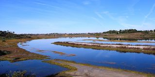 Big Sycamore Revisited. Back Bay wetlands in Newport Beach, CA Royalty Free Stock Image