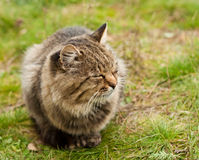 Big tabby cat Stock Photos