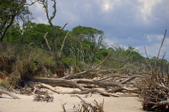 Big Talbot Island. Fallen trees on the beach of Big Talbot Island in North East Florida. The trees have been brought down by storm waters battering the shore stock image