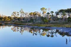 Big Talbot Island State Park, Florida. Early morning scene at Big Talbot Island State Park near Jacksonville, Florida royalty free stock photography