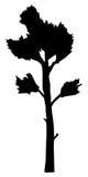 Big, tall pine. Silhouette of big, tall pine Royalty Free Stock Image