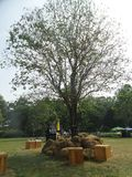 Big tall tree on party ground Royalty Free Stock Photos