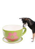 Big tea cup and small dog Royalty Free Stock Images