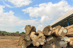 Big Teak timber storage yaed. Stock Image