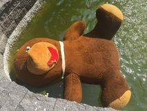 Big teddy bear in a fountain. Vandalism: damaged teddy bear thrown out into a fountain Royalty Free Stock Images