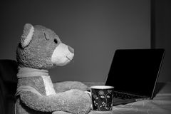 Big teddy bear toy sitting at  the table. In hand cup of coffee, while he working on a laptop. Funny scene with toy Royalty Free Stock Photography