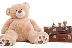 Big teddy bear. At white background royalty free stock photos