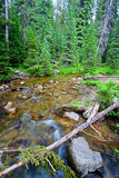 Big Tepee Creek in Wyoming. Big Tepee Creek flows through the Bighorn National Forest in Wyoming Royalty Free Stock Photo