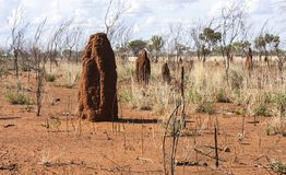 Big termite anthills. Australia, outback, Northern territory