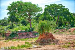 Big termite nest in a gorgeous landscape in the Yala Nationalpark Stock Image