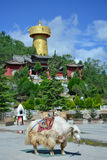 Big tibetian yak standing on the Shangri-La central square. Monastery and golden buddhist wheel on the background royalty free stock photos