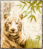 Big Tiger in the Jungle. Bengal tiger with jungle background and bamboo leaves stock illustration