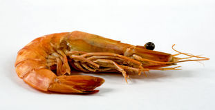 The big tiger prawn Stock Image
