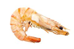 Big tiger shrimp isolated on white Stock Images