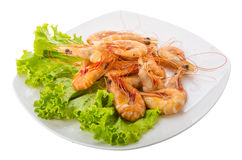 Big tiger shrimps Royalty Free Stock Photos