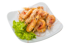 Big tiger shrimps Royalty Free Stock Images
