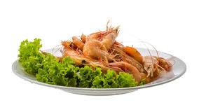 Big tiger shrimps Stock Images