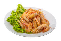Big tiger shrimps Stock Photography
