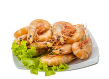 Big tiger shrimps Stock Image