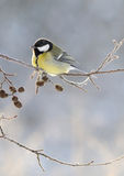 Big titmouse in a frost Royalty Free Stock Images