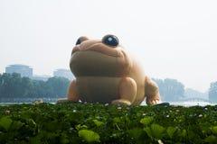 The big toad Stock Photos