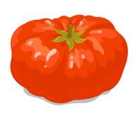 Big tomato 1 Royalty Free Stock Image