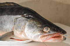 Big toothy fish on a platter side view Royalty Free Stock Photography